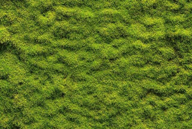 CityTrees-moss